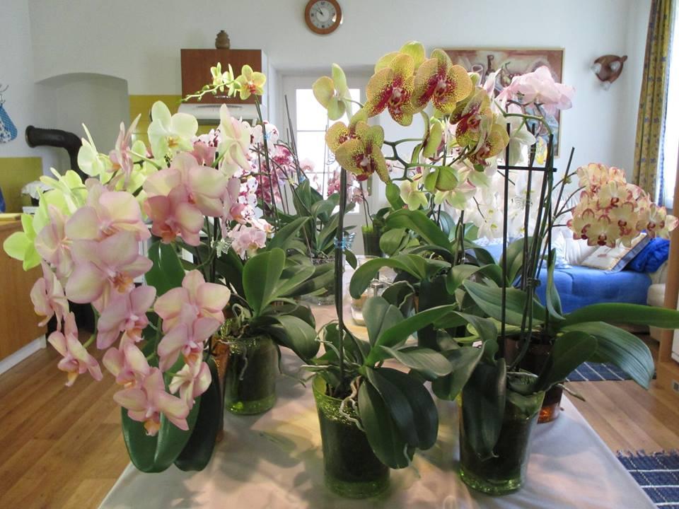 S orchideami sa musíte rozprávať, vraví naša čitateľka Květa Žilinová