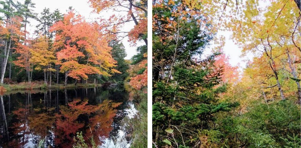 Jeseň v Kanade, ako ju vníma naša spolupracovníčka Ľubica Fajnerová